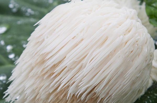 宜蘭-南山-瑞元菇園-猴頭菇-048.jpg