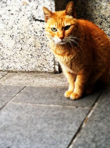 停車場的貓.jpg