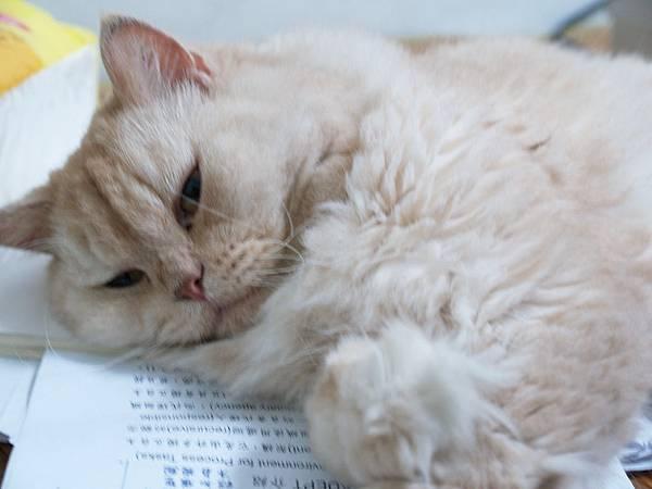 幫我看paper的貓