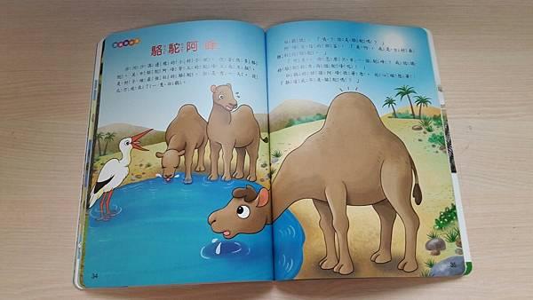 39-駱駝.jpg