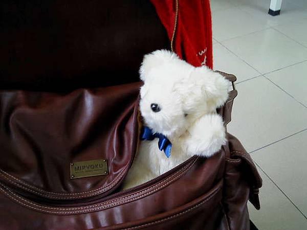 bear2_0517