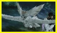 白之鳥.jpg
