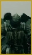 蝙蝠亞馬遜3.jpg