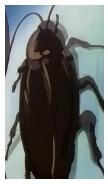 巨大蟑螂.jpg
