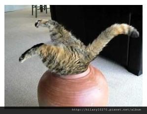 【貓貓】2月22日「猫の日」