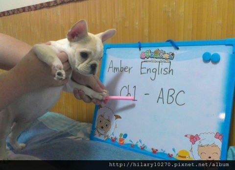 Amber英文老師