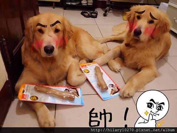 Do&Lo黃金獵犬搗蛋記