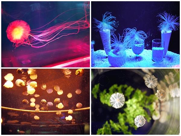 釜山水族館06