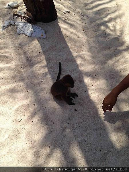 長灘島puka beach小猴子
