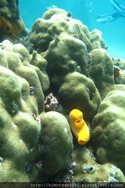 長灘島深潛海景-1