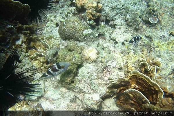 長灘島深潛海景-2
