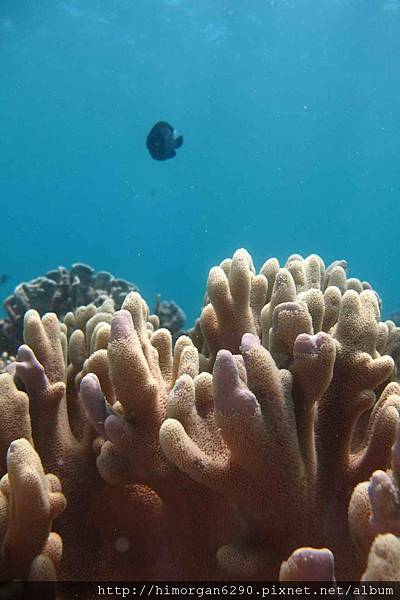 長灘島深潛海景-9