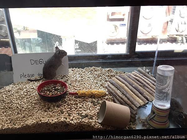 little zoo cafe-11.JPG