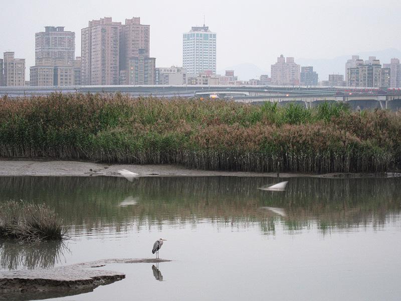早上的河濱好多鳥