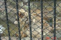 苏州,到動物園和东园散步3(96.6.25)