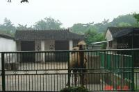 苏州,到動物園和东园散步5(96.6.25)