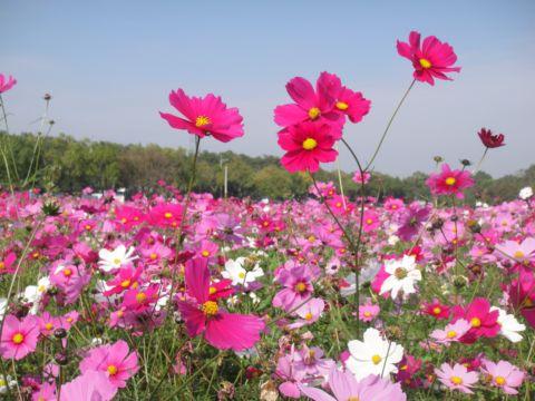 春日在斗六(101.2.4)