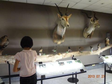 臺大博物館群(102.8.4)