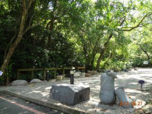 台北富陽自然生態公園。水同木(102.8.27)