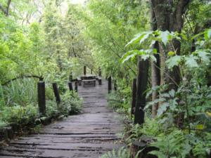 北埔,綠世界生態農園(99.4.3)