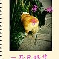 S Memo_57.jpg