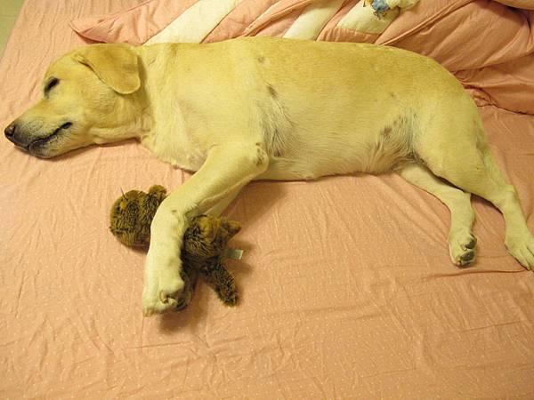 舒舒服服的佔據Hippo的床