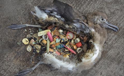 中途島上死去的信天翁