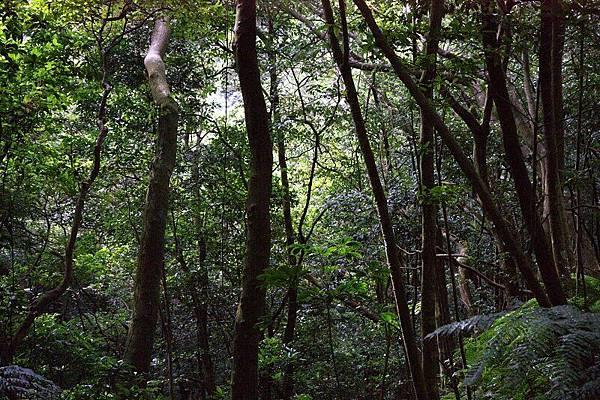 新山雨林一隅.jpg