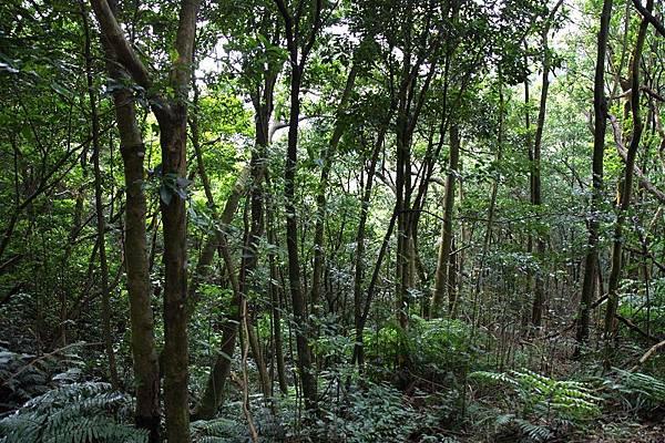 新山雨林二隅.jpg
