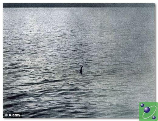 這是一幅著名的照片,據說這就是那條尼斯湖水怪游泳時的場景