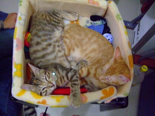 兩隻ㄧ起睡睡床!!
