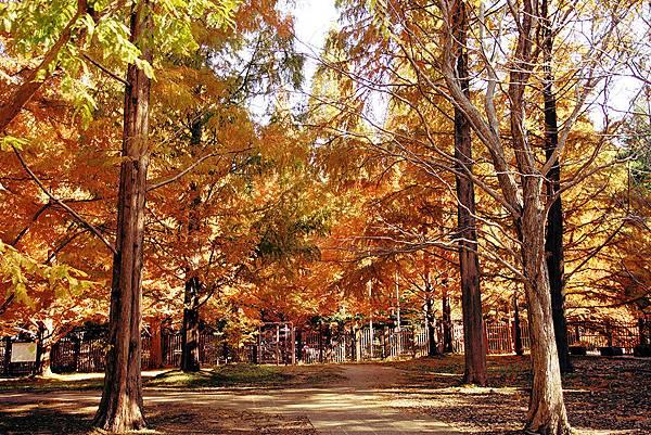 「神戶市立森林植物園」的圖片搜尋結果