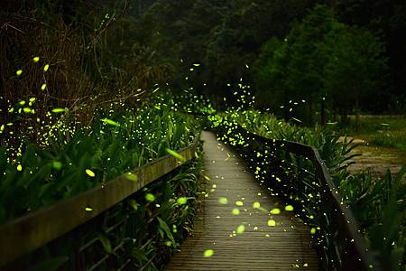 firefly-003.jpg