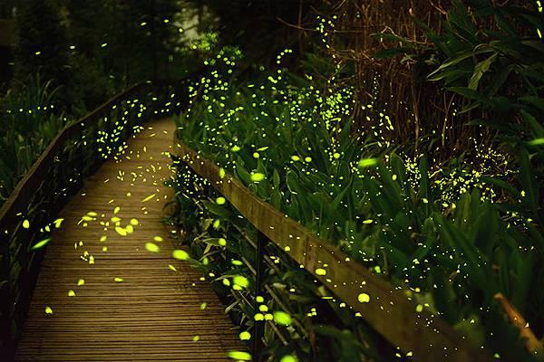firefly-005.jpg