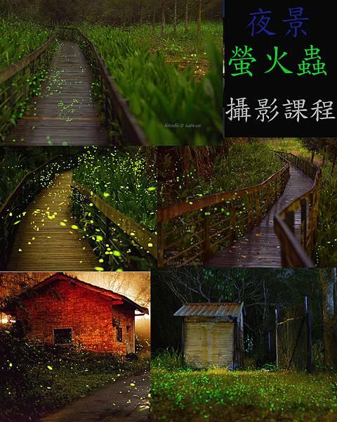 螢火蟲夜景-2.jpg