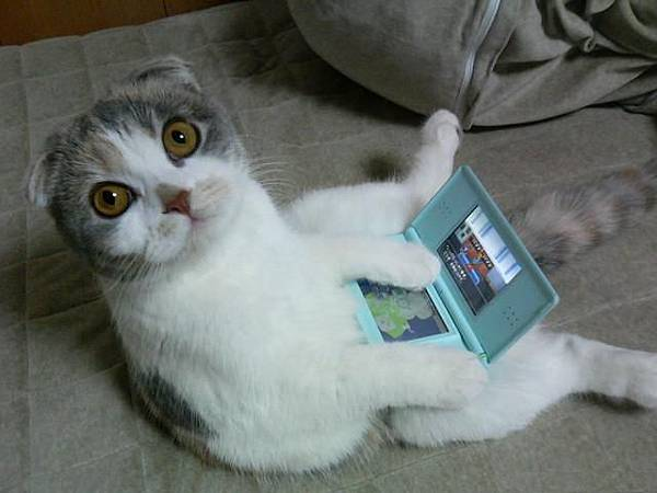玩NDS的呆呆貓