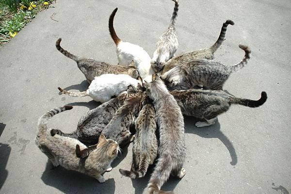 貓貓貓貓貓