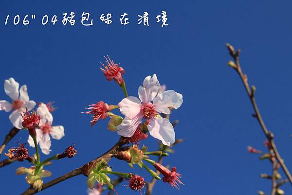 IMG_9732B.jpg