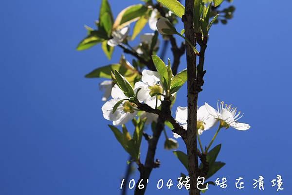 IMG_9906B.jpg