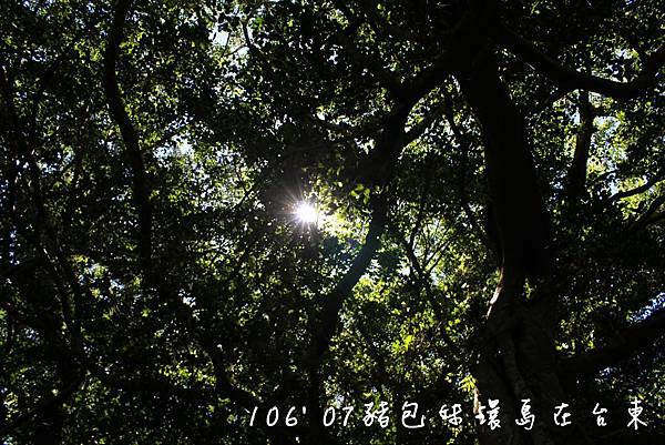 IMG_0454B.jpg