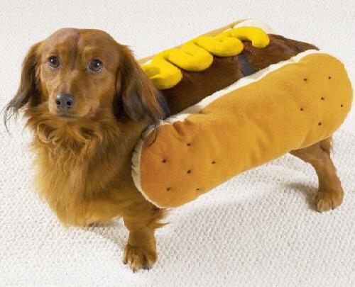 hot_dog_costume.jpg