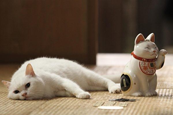 電影《貓侍》.jpg