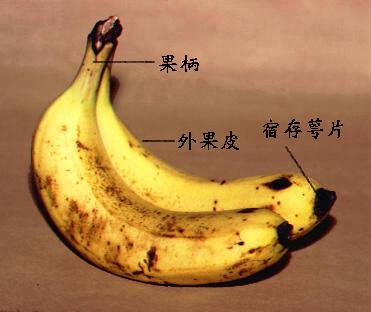 香蕉02.jpg