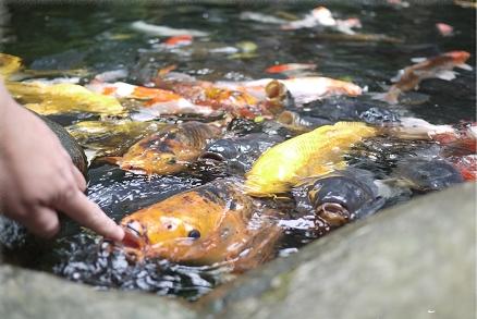 16-魚吃.jpg