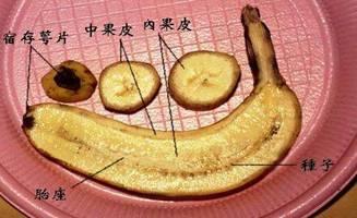 香蕉03.jpg