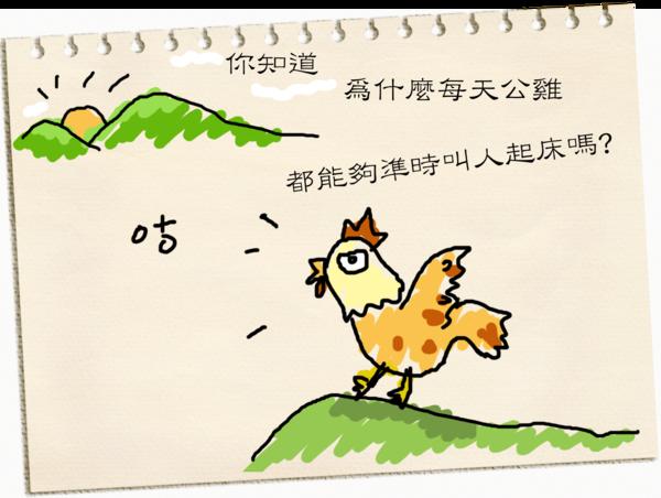 雞01拷貝.png