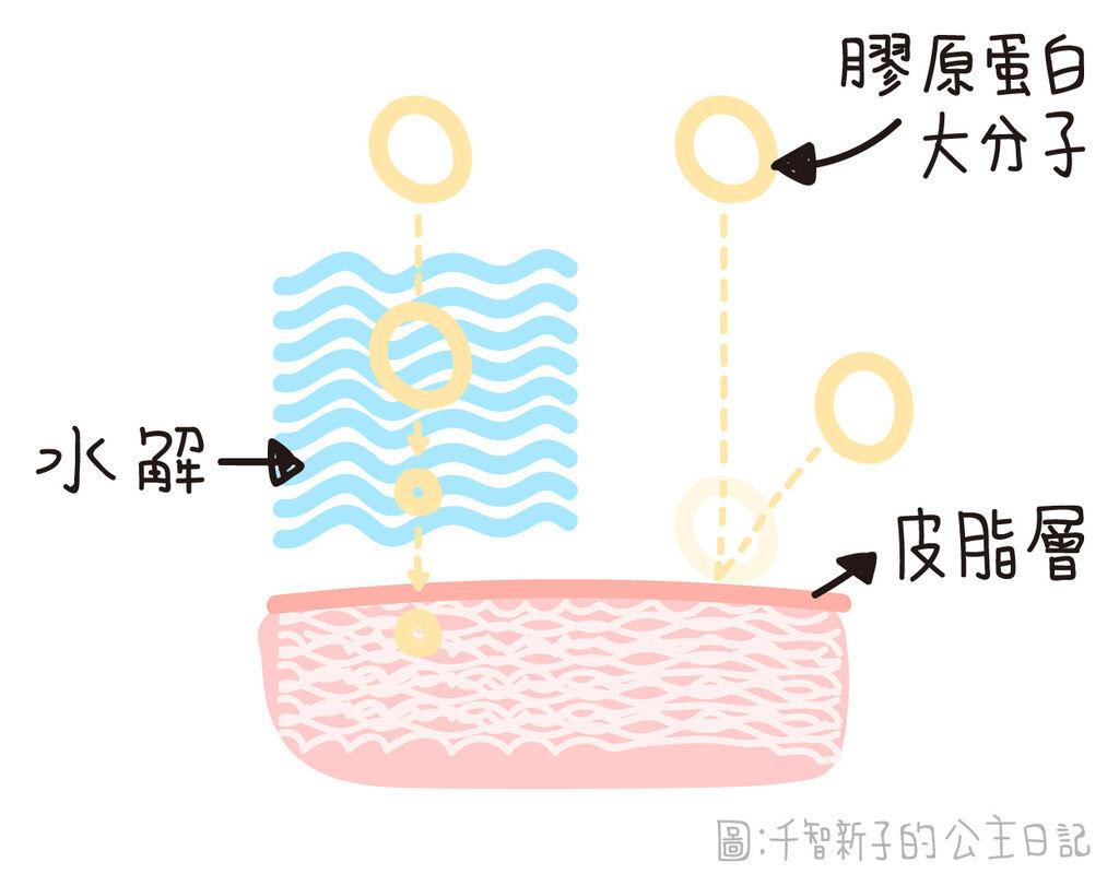 網路常常出現的「水解膠原蛋白」那是什麼?差在哪?