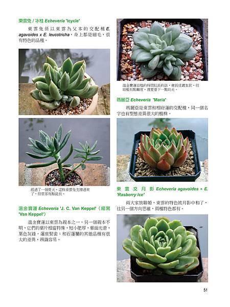 succulent-2-3-13.jpg
