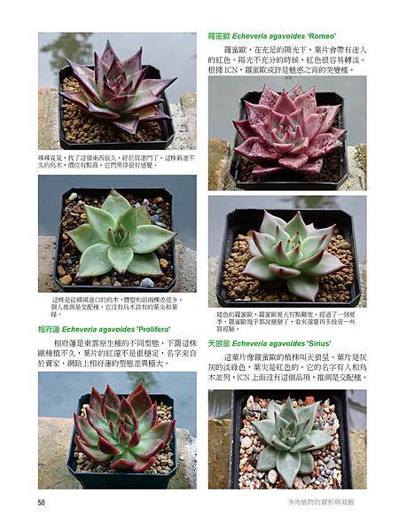 succulent-2-3-12.jpg