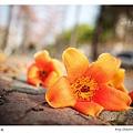 IMG_4236-fb